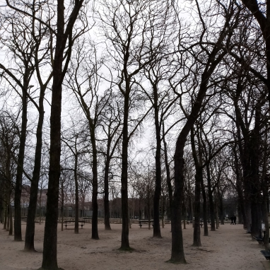 Trees Luxembourg Gardens